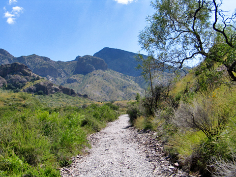 Dripping Springs Hiking Path